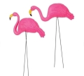 Rental store for FLAMINGOS in Sudbury ON